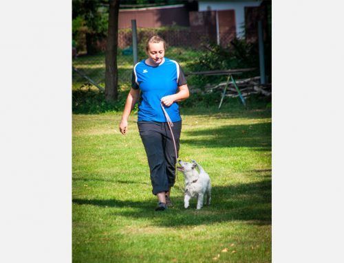 Five Ways to Work Out with Your Dog